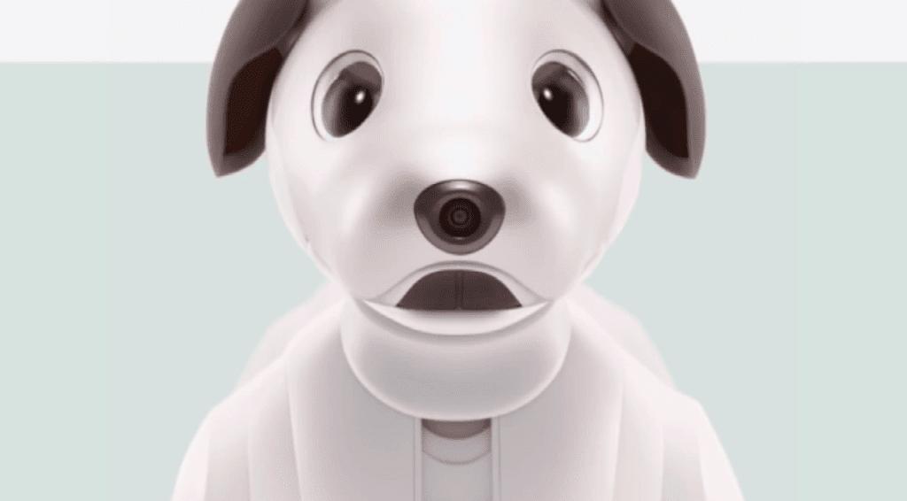 robot dog teaches right