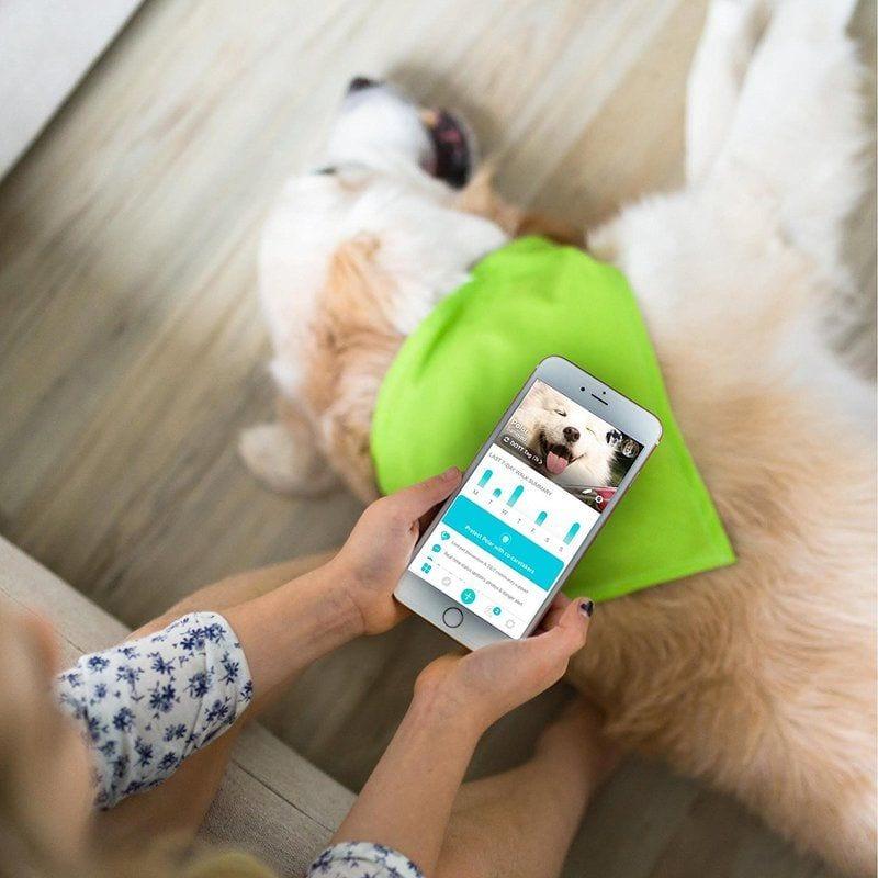 dott dog tag review
