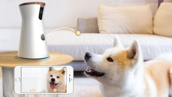 doggy camera that gives treats review