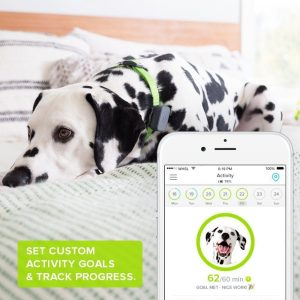 whistle gps dog tracker review