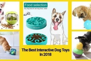 best interactive dog toys