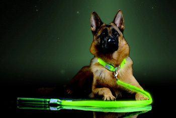 Industries Premium LED Reflective Dog Leash