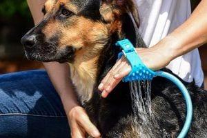 Aquapawdog bathing glove review