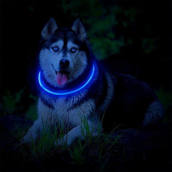 Fashion & Cool Light Up Dog Collar