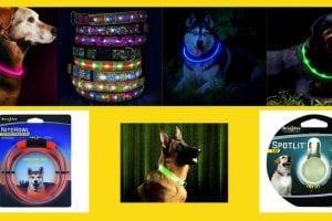 led dog collars