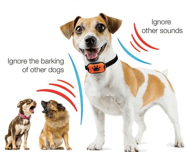 DogRook Anti-Bark Collar