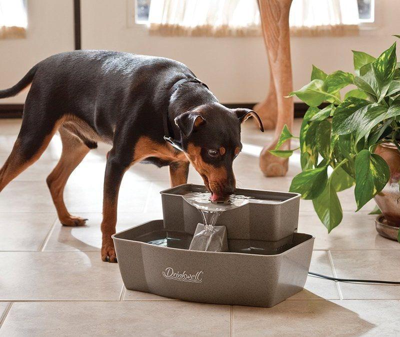 PetSafe Drinkwell Multi-tier Pet Fountain 100oz