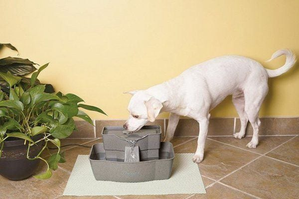PetSafe Drinkwell Multi-tier Pet Fountain for dogs