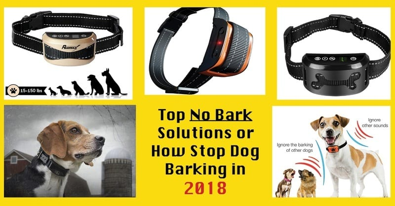 no bark solutions or how to stop dog barking