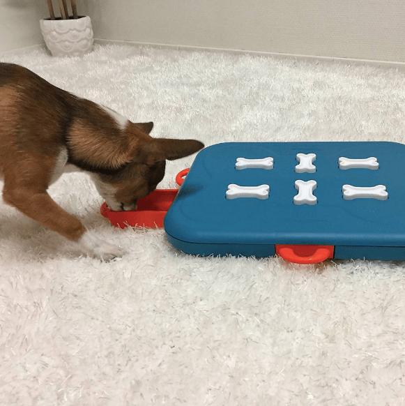 dog casino puzzle