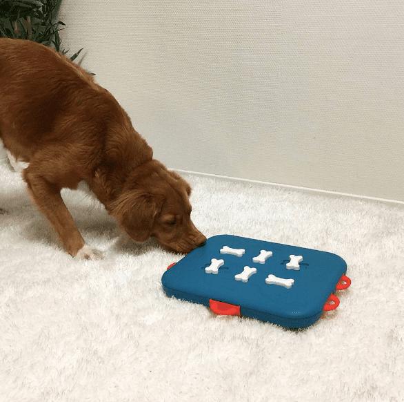 dog casino toy