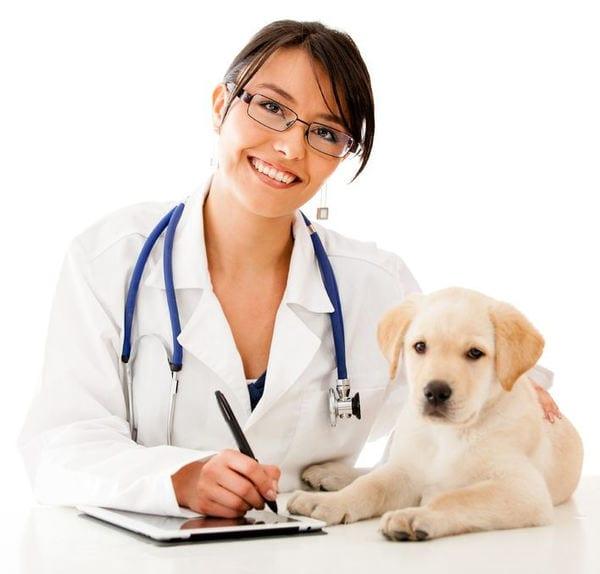 dog health when travel in a car