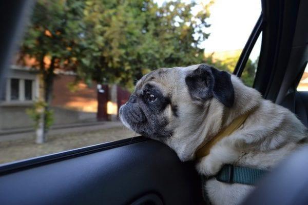 dog training before road trip