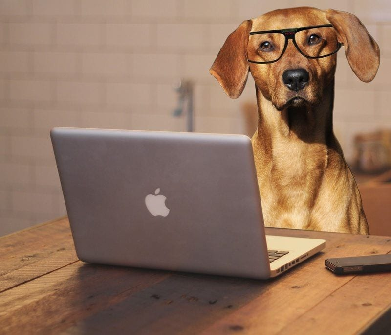 dog startups