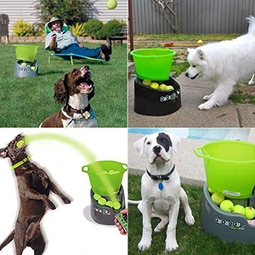 GoDogGo Fetch Machine for dogs