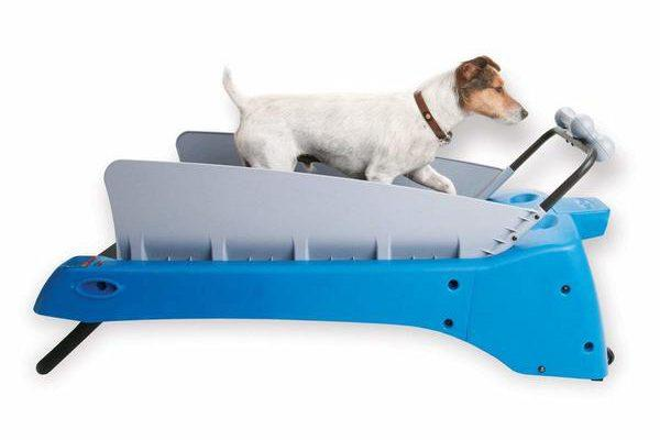 PetZen Dog Treadmill review