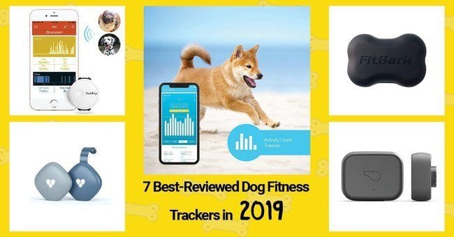 7 best reviewed dog fitness trackers in 2019