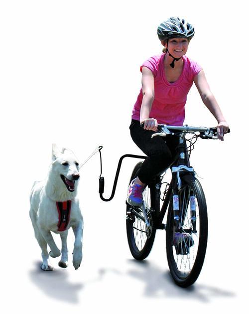 Springer Dog Exerciser advantages