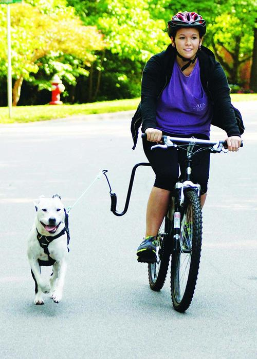Springer Dog Exerciser disadvantages