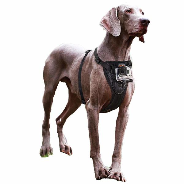 kurgo dog harness with camera mount