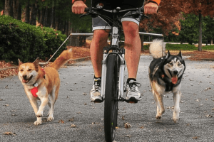 walky dog bike leash review